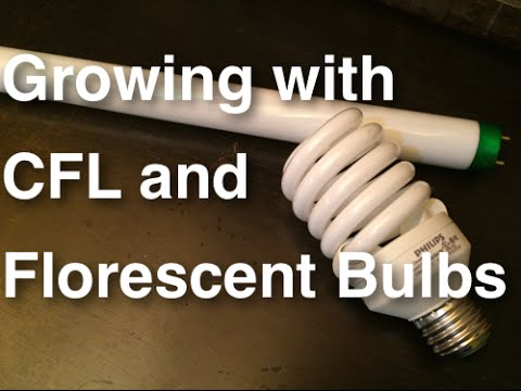 How To Grow Plants Using Cfl And Florescent Lights Growing