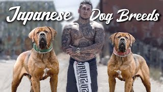 10 Amazing Japanese Dog Breeds
