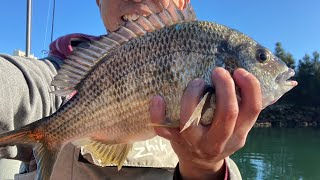 I found the bream but got SERVED by Marina Security AGAIN Sydney Fishing