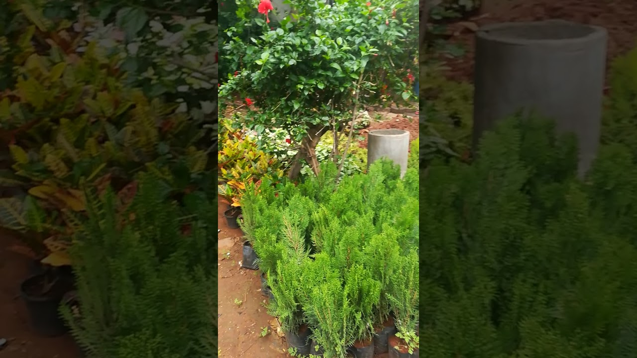 Evergreen Plant Nursery You