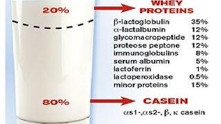 חלבונים בחלב