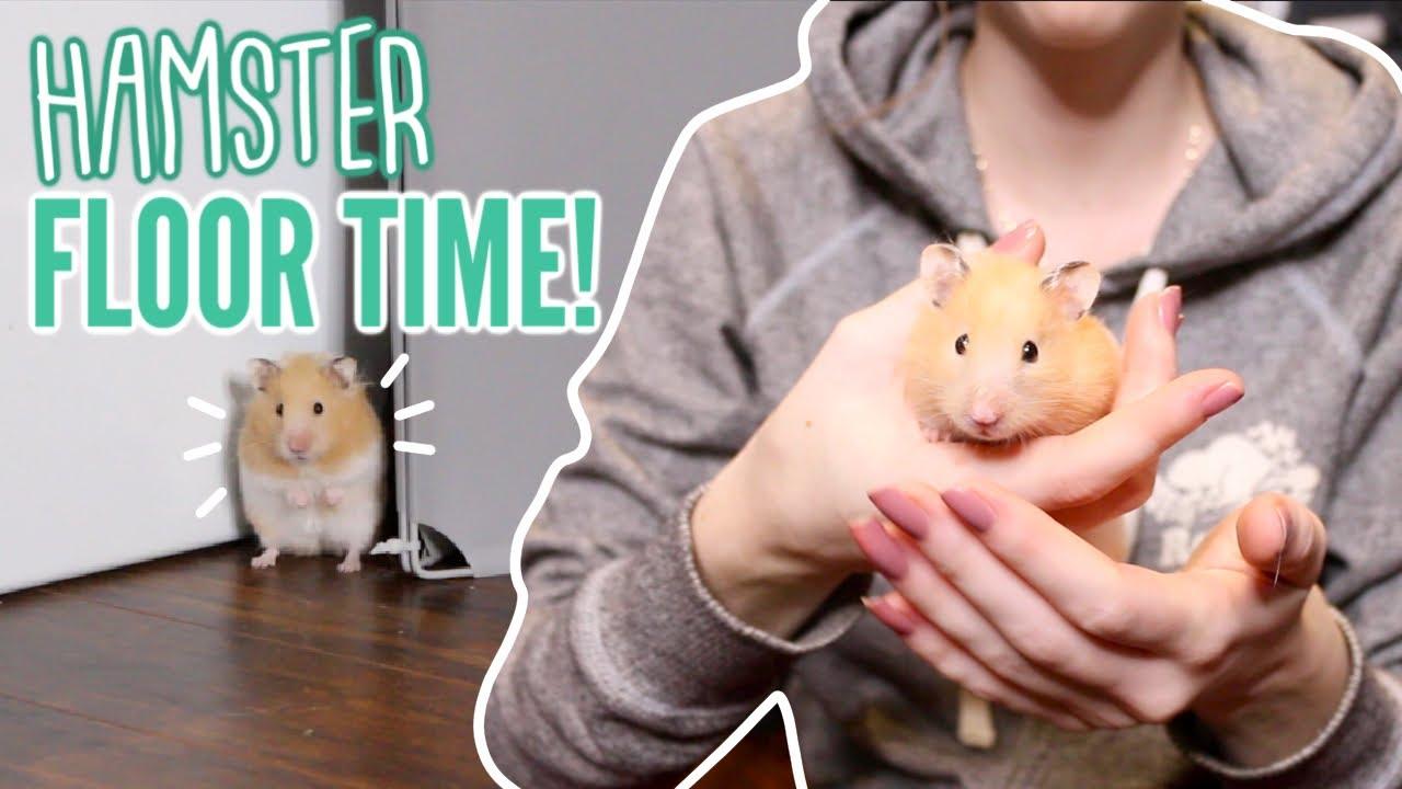 Videos hamster free 6 Ways