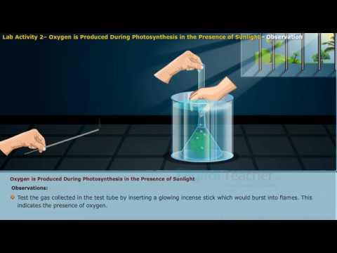 The Factors Affecting Hydrilla Verticillata