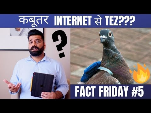 fact-friday-#5---pigeon-faster-than-internet!!!-crazy-tech-facts🔥🔥🔥