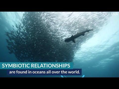 The Ocean's Symbiotic Relationships