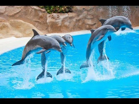 Espectaculo de Delfines, en el Zoo de Madrid España. Dolphin show at the Zoo