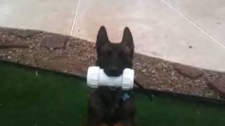 Teach Your Dog To Retrieve And Beg.