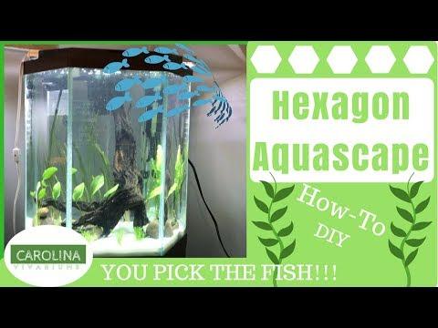 HEXAGON AQUASCAPE - DIY Aquascape Guide