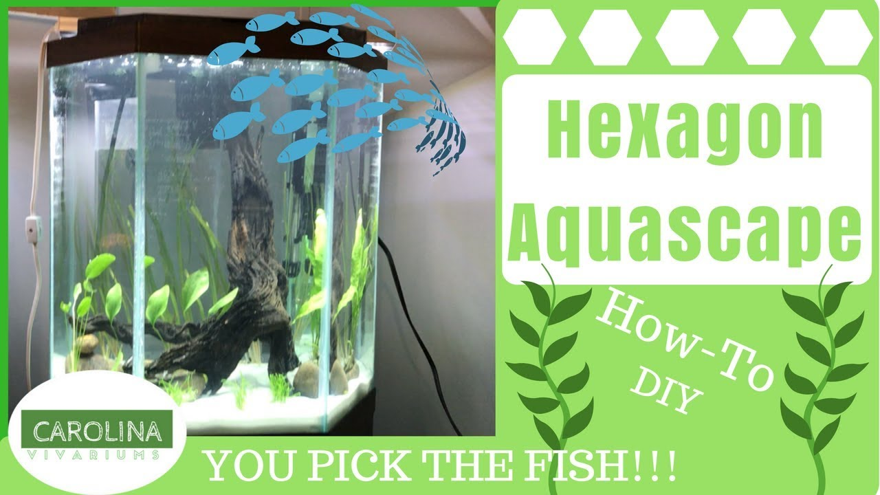 Hexagon Aquascape Diy Aquascape Guide Youtube
