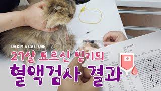 [캣튜브] CATTUBE 27살 고양이 밍키의 혈액검사…