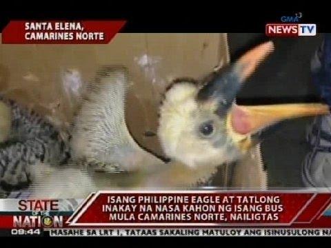1 Philippine Eagle at 3 inakay na nasa kahon ng isang bus mula sa Camarines Norte, nailigtas