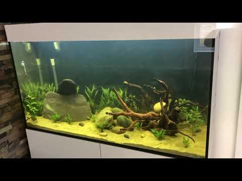 White fungus spores wood fish tank
