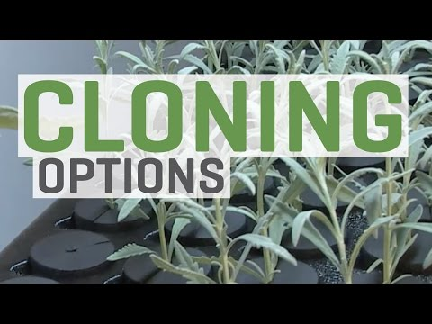 Cloning Plants—You Have Options!