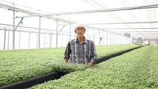 금서면 신풍영농조합법인 채소