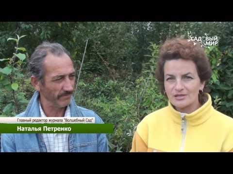 Вопрос: Какие есть самые поздние сорта хризантем для средней полосы России?
