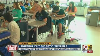 Diabetes alert dog protects Edgewood middle schooler 24 hours a day