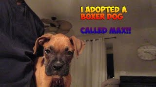 TROLL KING I ADOPTED A BABY BOXER! FACE REAVEAL SOON!!