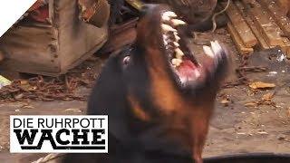 Lea (12) kauft einfach einen Hund: Tierbetrüger am Werk   Bora Aksu   Die Ruhrpottwache   SAT.1 TV