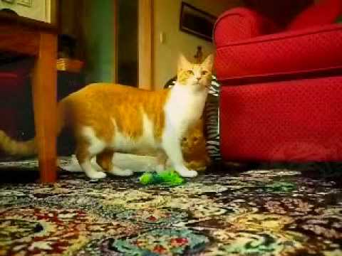 Cats are nuts youtube cats are nuts publicscrutiny Image collections
