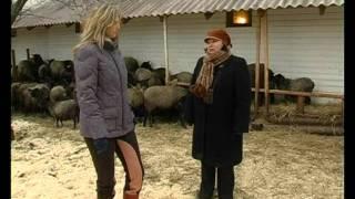 Романовская порода овец. Живой дом серия 46