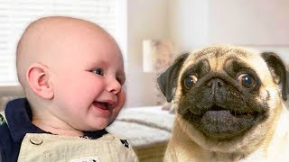 Funny Dogs and Babies Playing Together - Cute dog & baby | BABY AND PET