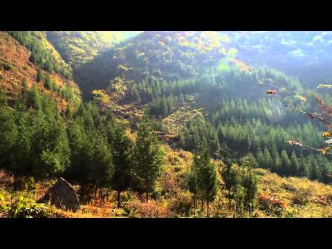 Video image: Reforestation: Impact on Climate