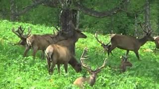 Горный Алтай Природа - 1(Природа Горного Алтая., 2011-08-23T10:48:45.000Z)