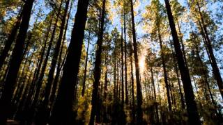 �������� ���� Индейская этническая музыка  -- Флейта, плюс Nature (2011) ������