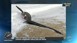 EUA: Tubarões não suportam frio e morrem em praia de Massachusetts | SBT Brasil (03/01/18)
