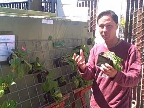 Grow A Vertical Vegetable Garden In A Small Space With Hog Wire Fencing