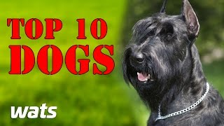 TOP 10 BEST GUARD DOGS || Best Of Ten