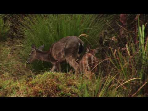 Parque Nacional Natural Chingaza Youtube