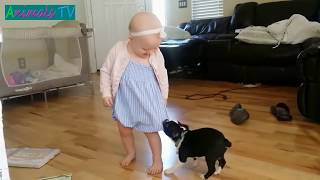 MOST Crazy Dogs Annoying Babies, If You Laugh You Lose Challenge, Funny Dogs Videos by Animals TV