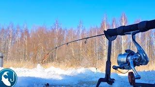 Как наловить крупной плотвы на фидер зимой
