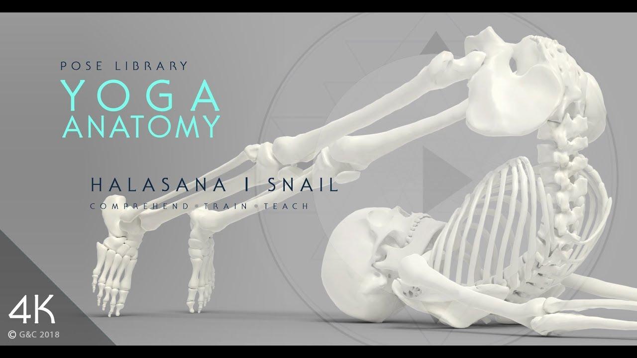 YOGA ANATOMY | POSE LIBRARY | HALASANA or SNAIL POSE - YouTube