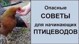 Чем нельзя кормить кур уток и другую домашнюю птицу Обзор видео и коментарии