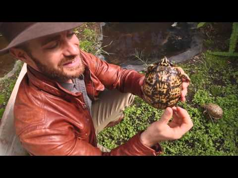 Zoo Med's Amazing Reptile Greenhouse! Kamp Kenan S3 Episode 27