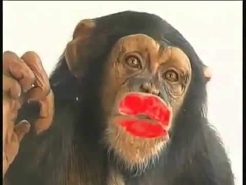 Поцелуй обезьяны