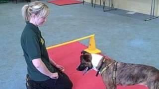 Dogs Trust Glasgow : Kiera