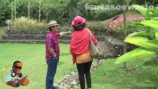 Cianjur Tea Plantation - Cianjur 2013 (Original)