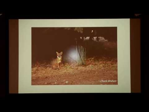 April 2013 From Shore to Sea Lecture: Back from the Brink—Island Fox Populations Recovering