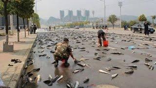 অদ্ভুত মাছ বৃষ্টি !!! আকাশ থেকে ঝরে পড়ল লাখ লাখ মাছ !! Latest Bangla News