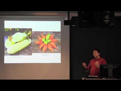 Michael Mazourek: New vegetables for organic systems