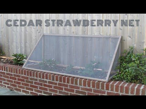 DIY Cedar Strawberry Net | $5 | NATHAN BUILDS