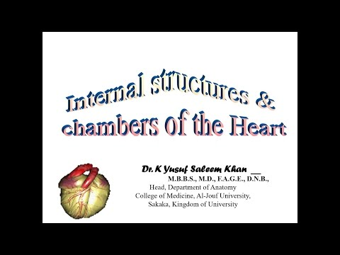 The HEART - Anatomy Lecture on the Internal Structures & Chambers of the Heart ........ by Dr. Yusuf