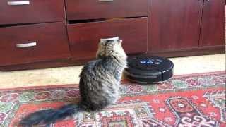Кошка катается на пылесосе