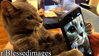 r/Blessedimages | CAT SELFIE