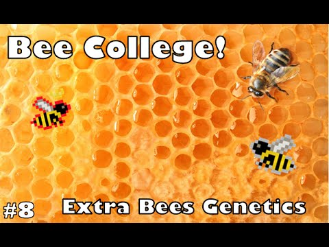 Bee College - Extra Bees Genetics (#8)
