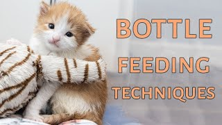 two-ways-to-bottle-feed-a-kitten