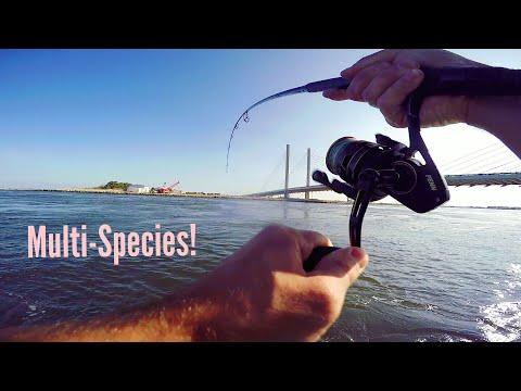 Inlet/Jetty Fishing Delaware (Surprising!)